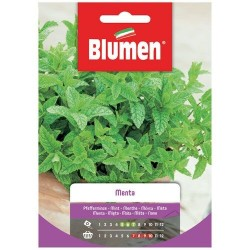 Graines de Menthe - BLUMEN - Semences - DE-516832