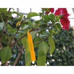 Étiquettes à accrocher pour plantations - Polypropylène - Lot de 40 - 25 cm - CATRAL - Tuteurs / Cordes / Étiquettes - BR-14...