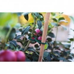 Clip de fixation pour plants de tomates - Lot de 25 - CATRAL - Tuteurs / Cordes / Étiquettes - BR-143472